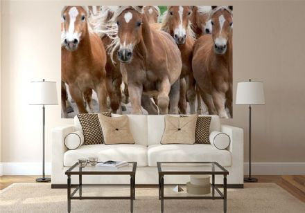 Running horses wallpaper mural - M